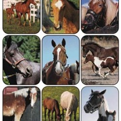 STICKERS GIANT 36 CT HORSES (REAL PHOTOS) EUREKA