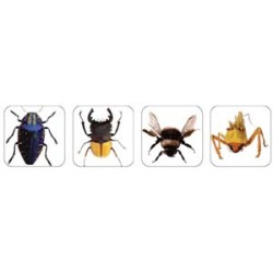 STICKERS THEMATIC 120 ct INSECT PHOTOS EUREKA
